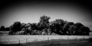 Standout, Near Benkelman, NE
