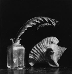 Still life with a shell