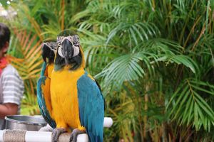 Parrot in Paradise