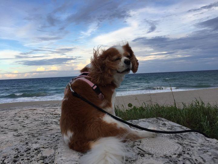 Dog Enjoying the Beach Breeze - Linda Bell Brighton