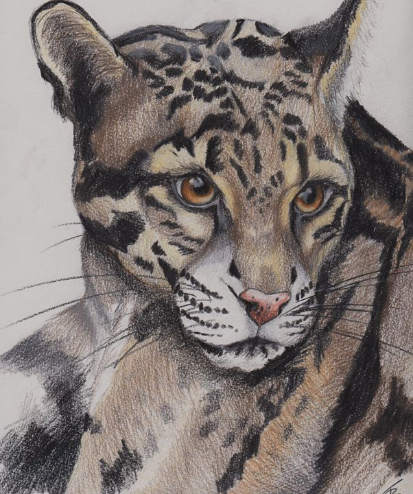 Leopard - Paws & Portraits by Theresa