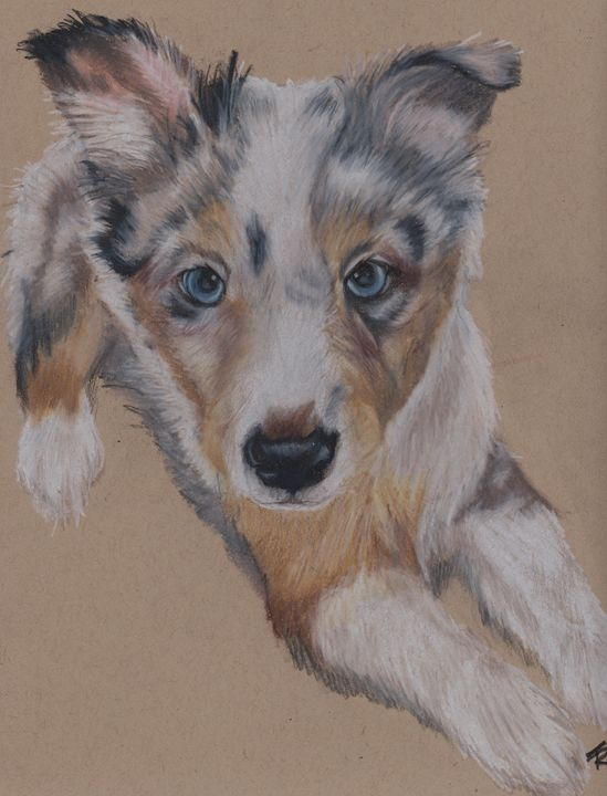 Young Sheltie pup - Paws & Portraits by Theresa