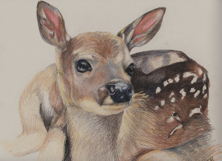 """""""Nervous Fawn"""" - Paws & Portraits by Theresa"""