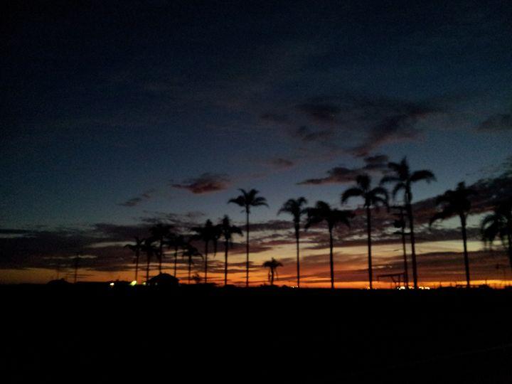 Sunset Palms - Pacific Yellow