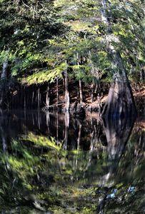 Fisheye Reflections