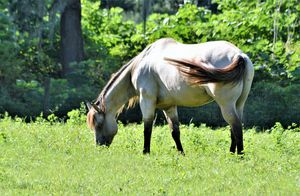 Horse Surrounded by Summer Green