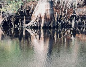 Macro Cypress Reflection
