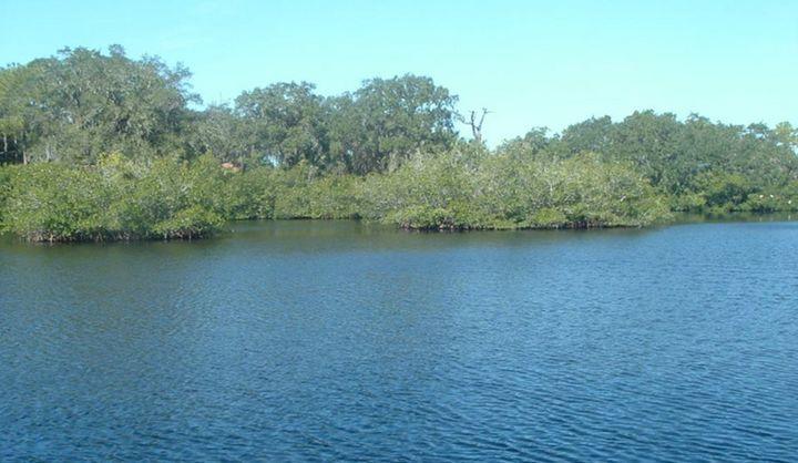 Peaceful Lake -  Tashadragonlady