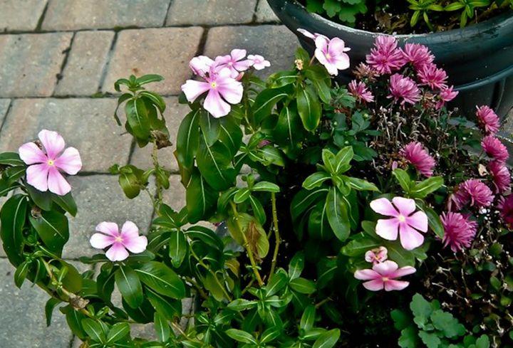 Pool Flowers -  Tashadragonlady