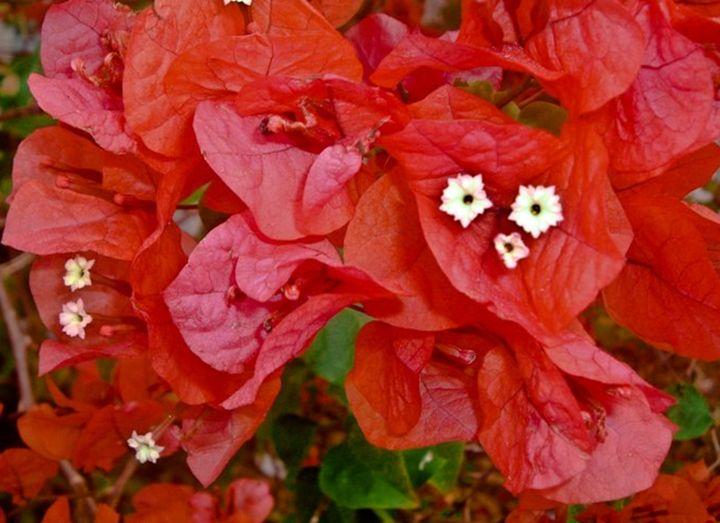 Soothing Reds -  Tashadragonlady