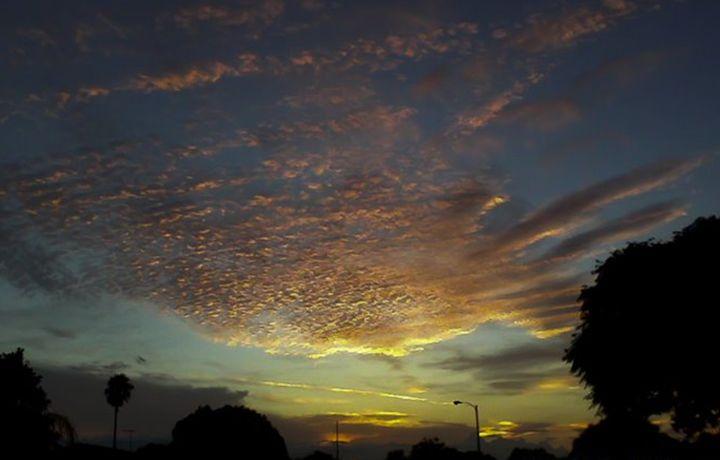 Sky Dance -  Tashadragonlady