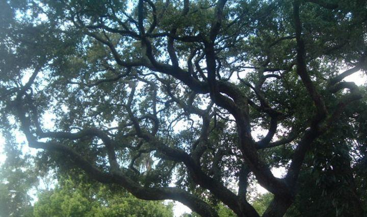 Whimsical Branches -  Tashadragonlady
