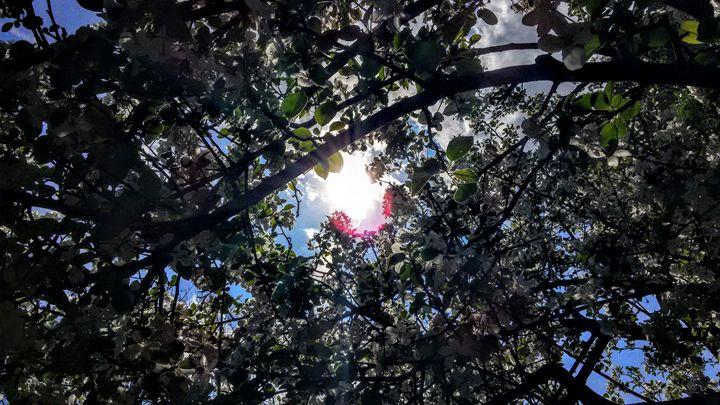 Through the Dogwood Tree - A.M.C.