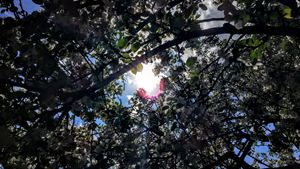 Through the Dogwood Tree