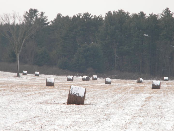 Sugar Frosted Hay - Porter Prints