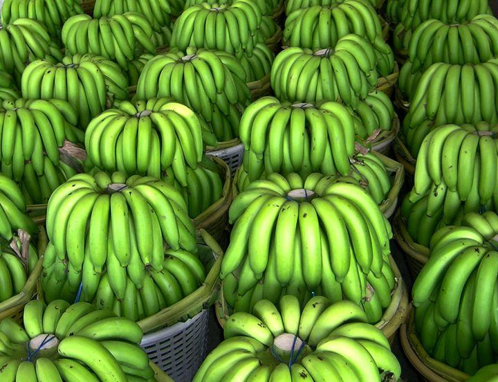 Rows and Rows of Bananas - Fun Art