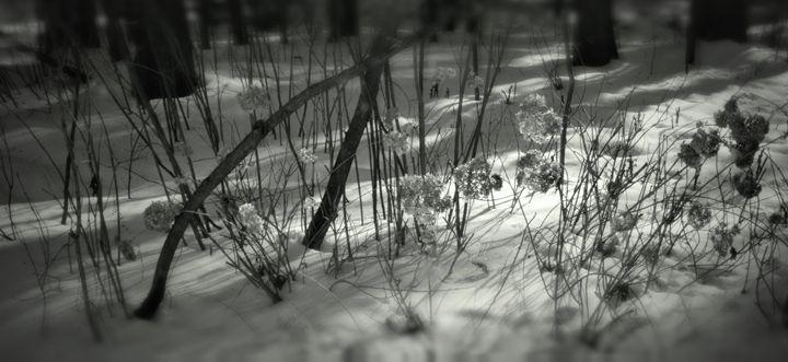 Hydrangea in snow - BoboWorks