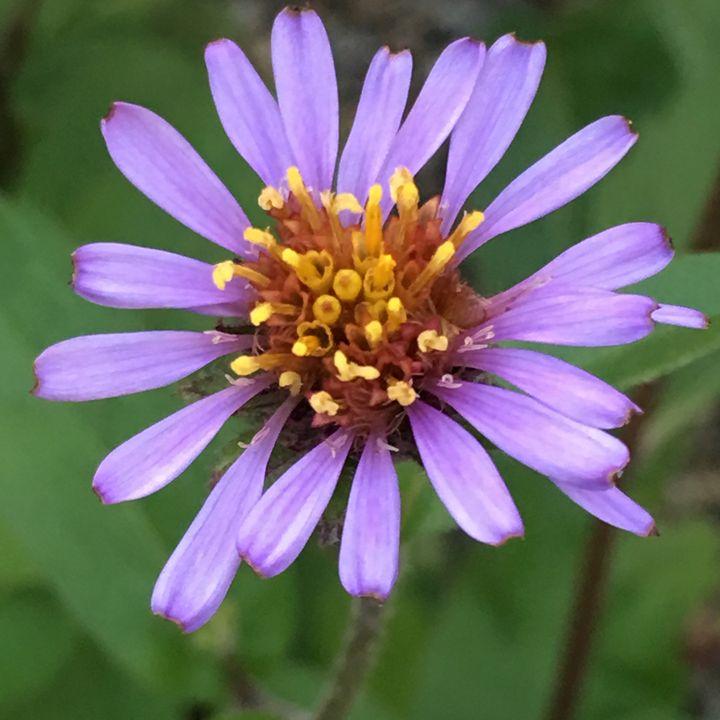 Flower - Elizabeth Clark