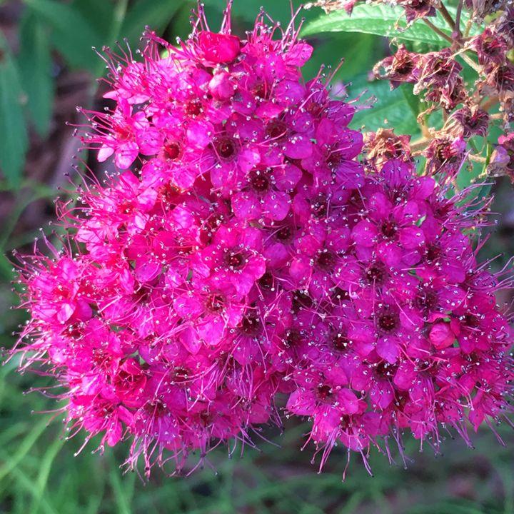Flower #5 - Elizabeth Clark