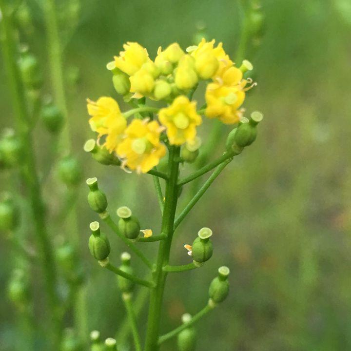Flower #8 - Elizabeth Clark