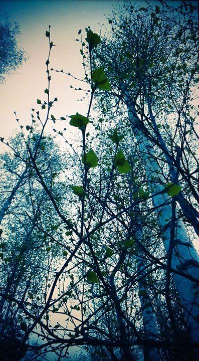 Leaves - Elizabeth Clark