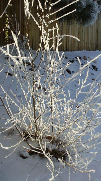 Ice Bush - EPitts Art Photography