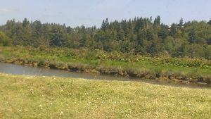 Green Days in Oregon