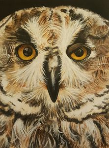 Whooo are you looking at?