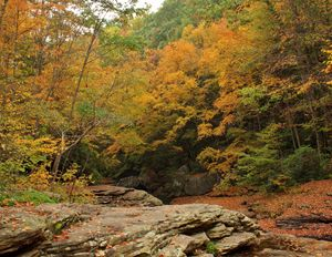 Autumn Color I