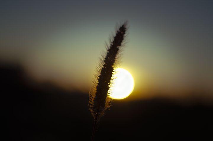 weed at sunset - Vlad Baciu Photography