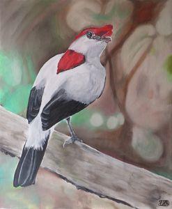 Bird 12.