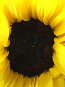 Just like a sunflower. - Dare to be different