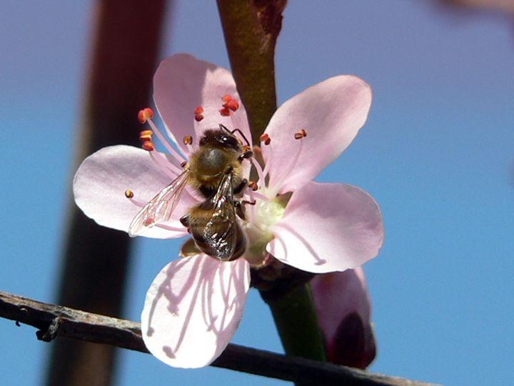 Bee - oriaj