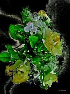 Rhapsody Of Yellow Roses