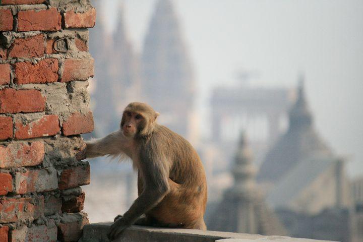 Guardian of Varanasi - Beynsh Photography