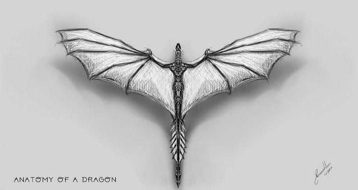 Anatomy of a Dragon - BlueJay Artwork