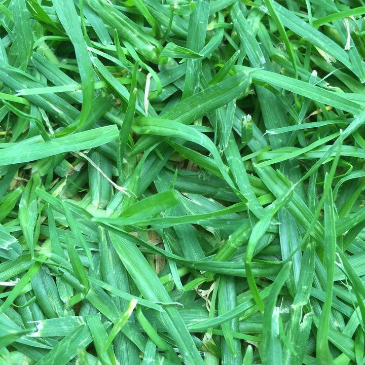 Grass - Gallery