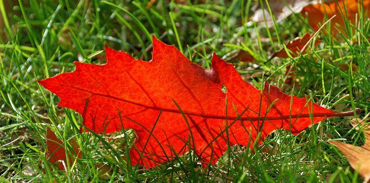 Leaf alone - Heliosphile