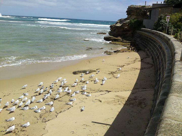 seagulls drop - Trevor Donoghue, Don't know you art