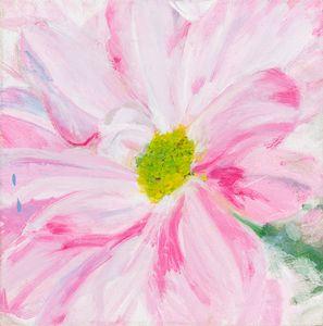 pink chrysanth