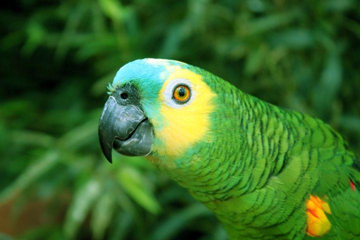 Tropical Parrot - PeachPanda Photography