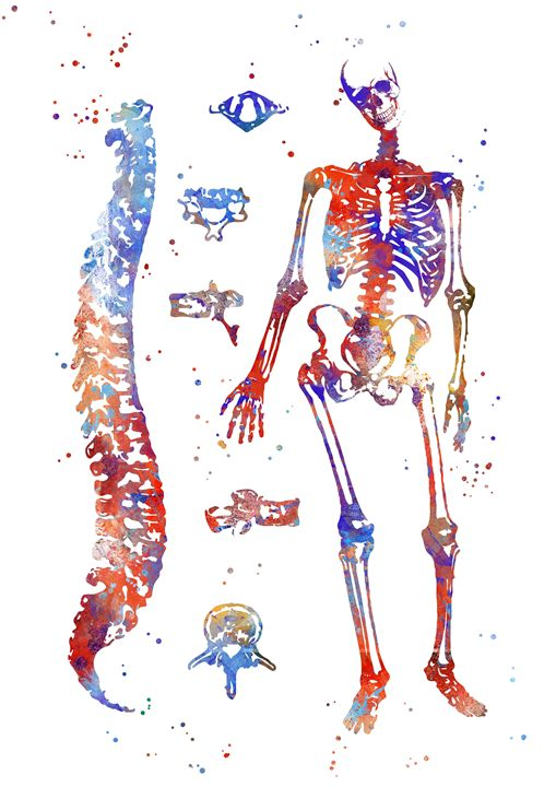 Human Anatomy Bones Rosaliat Paintings Prints Science