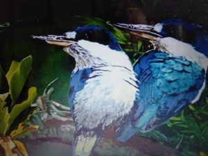 2Blue Kingfishers