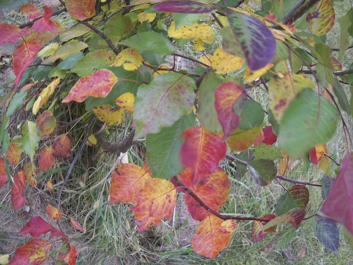 Autumn Leaves Globe - jilljj
