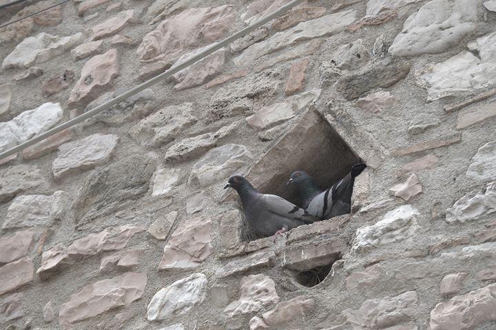 Pigeon House - Hankins Gallery