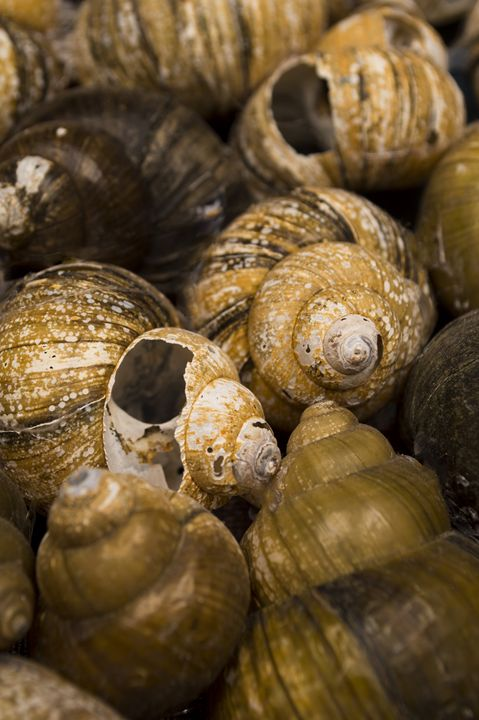 Vandiveer Shells 1 - Amanada Sabel