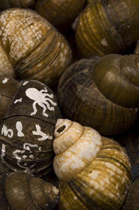 Vandiveer Shells - Amanada Sabel