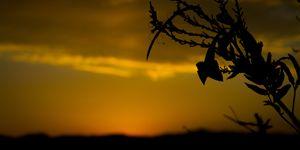 Desert Sunset 2015