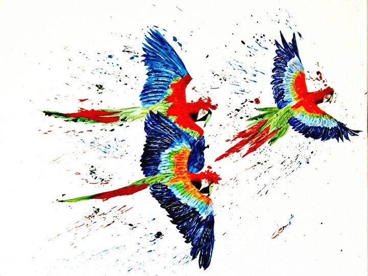 The Happy Parrot - One Studio