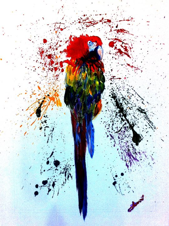 The Parrot - One Studio